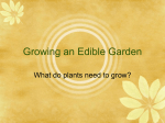 Growing an Edible Garden