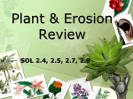 Plant & Erosion Review
