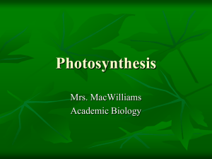 Notes Photosynthesis