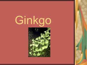 Gingko - Faculty