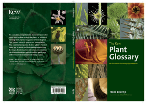 Plant Glossary The Kew Henk Beentje