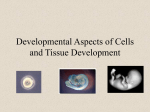 Developmental Aspects of Cells and Tissue Development