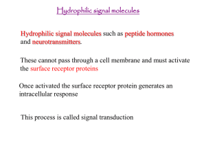 Lesson 7 Hydrophilic signalling