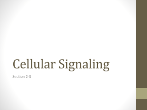 Chapter 11 Cellular Signaling