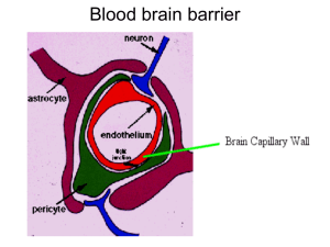 Blood brain barrier - Selam Higher Clinic