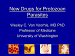 New Drugs for Protozoan Parasites