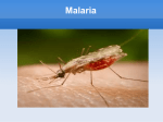 Malaria Symptoms - Our bilingual project