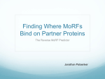 Finding Where MoRFs Bind on Partner Proteins The Reverse MoRF Predictor Jonathan Patsenker