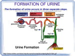 FORMATION OF URINE