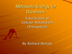 Metabolic Energy - Metabolism Foundation