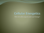 Cellular Energetics - Mount Mansfield Union High School