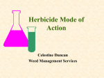 Herbicide Mode of Action - Montana State University