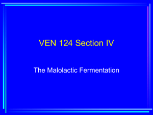 VEN 124 Section IV