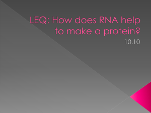 LEQ: How does RNA help to make a protein?