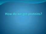 How do we get proteins? - Sebastian Charter Junior High