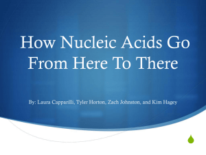 Everybody Poops: How Nucleic Acids Go From Here To There