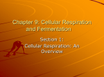 Chapter 9: Cellular Respiration and Fermentation
