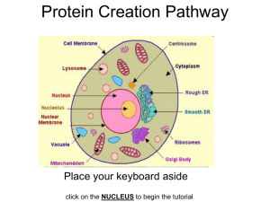 Protein Creation Pathway