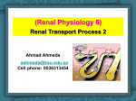 (Renal transport Process).
