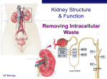 Kidney Excretion PPT Notes - Bremen High School District 228
