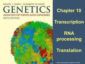 second of Chapter 10: RNA processing