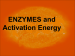 Enzyme Notes Activation Energy