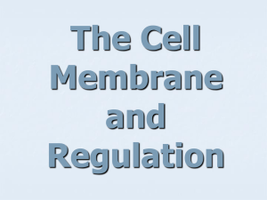 Cell Membrane and Regulation