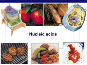 Ch 5 Nucleic Acids Powerpoint 2012
