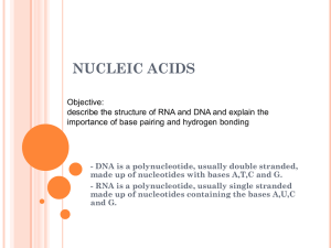 nucleic acids - onlinebiosurgery