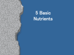5 Basic Nutrients