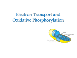 Electron Transport and Oxidative Phosphorylation