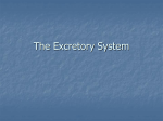 The Excretory System 38-3