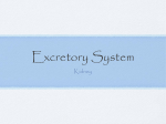 Excretory System - The Northwest School
