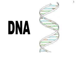 DNA PPT - Alevelsolutions