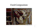 Basics of Feed Composition