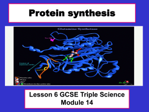 Protein synthesis - Teachnet UK-home