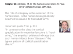 Chapter 15: Johnson, M. H. The human social brain: An *evo
