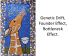 Genetic Drift, Founder Effect, Bottleneck Effect