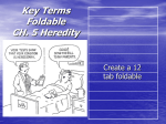 Key Terms Foldable CH. 5 Heredity
