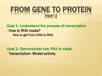 From Gene to Protein Part 2