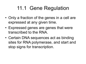 Chapter 12 DNA and RNA - Northwestern High School