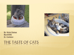 The Taste of Cats - University of Maryland, College Park