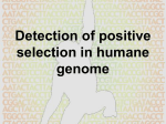 Detection of positive selection in humane genome