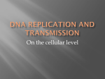 DNA Repilication and Transmission