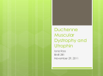 Duchenne Muscular Dystrophy and Utrophin