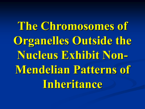 Cells can contain one type or a mixture of organelle genomes