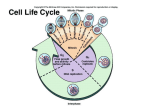 cell cycle - APBiologyWiki