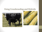 Using Crossbreeding and Hybrids