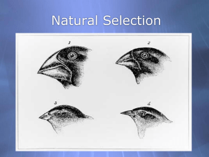 110586_Natural_Selection