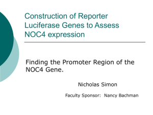 Construction of Reporter Luciferase Genes to Assess NOC4
